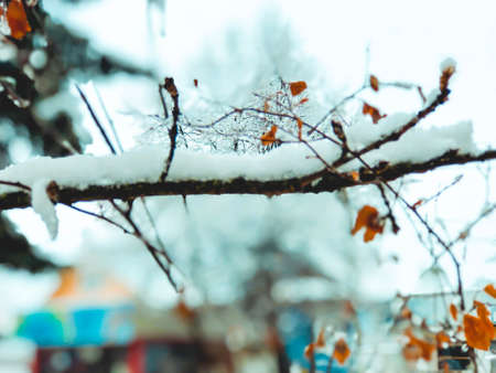 Sprig of a tree, leaves in the snow. Snow on the street of the city. The beginning of winter in Bakuriani. Imagens