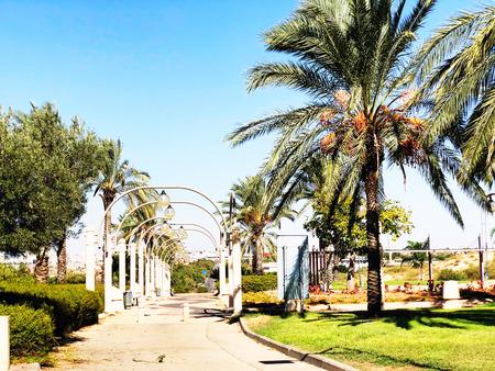 Street light and palm trees along sidewalk against blue sky.