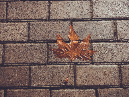 Autumn fallen leaf on the decorative gray concrete bricks. Close-up shot.