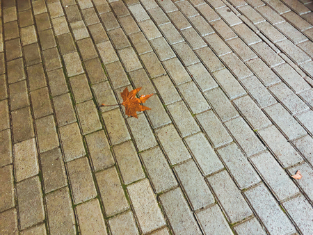 Autumn fallen leaf on the decorative gray concrete bricks. Close-up shot.