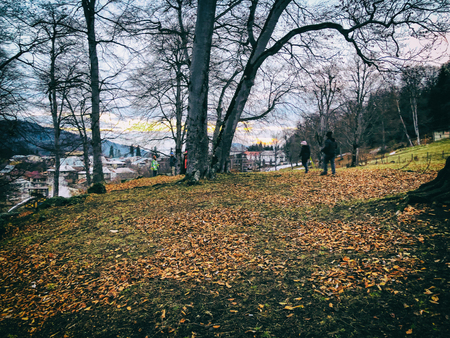 Fallen leaf in the autumn forest. Children walking in the woods. Forest with trees and dry fallen orange autumn leaves. Autumn in the mountains. Bakuriani.