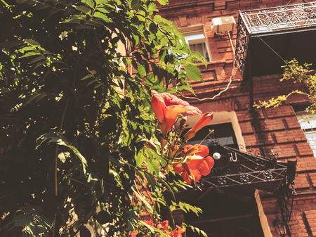 Old Tbilisi architecture, yard, windows, flowers and green leaves in summer day.