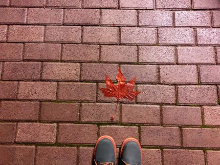 Autumn fallen leaf on the decorative gray concrete bricks. Part of shoes. Close-up shot. Stock Photo