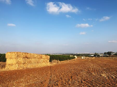 Field with hay bales after harvest in summer in Israel.