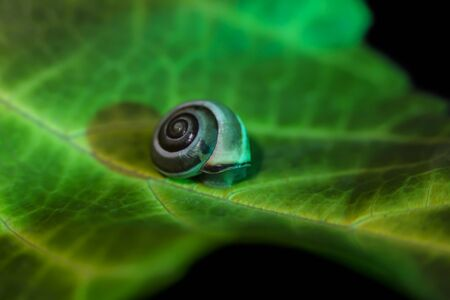 little snail on a green leaf,  close up shoot.