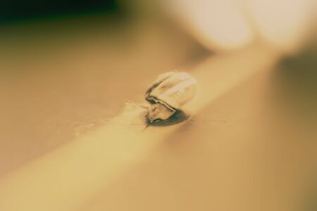 little snail on the surface, close up shoot. Stok Fotoğraf