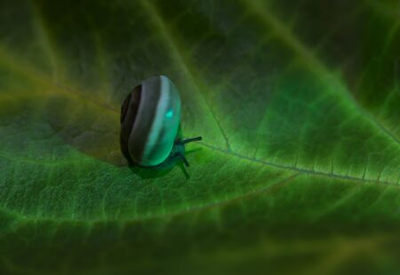 little snail on a green leaf,  close up shot.