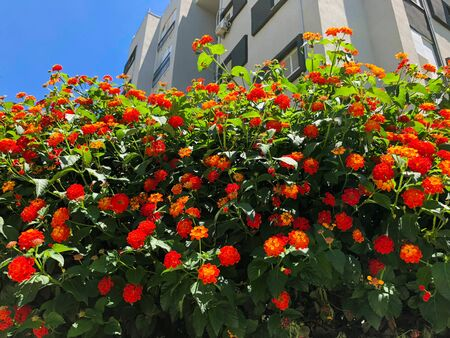 Bright and beautiful flowers in the city of Rishon Le Zion.