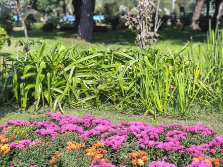 Beautiful landscape with colored flowers in a city park, a warm autumn day in the city.