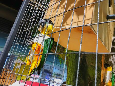 Green-yellow macaw parrot portrait. Macaw parrot sitting in a cage. Colorful lovely birds.