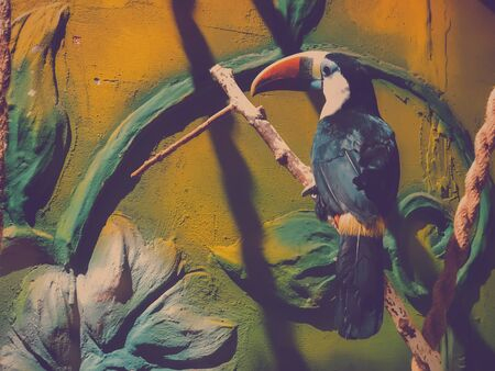 Toucan sitting in on a tree branch in the aviary, colorful tropical birds from America.