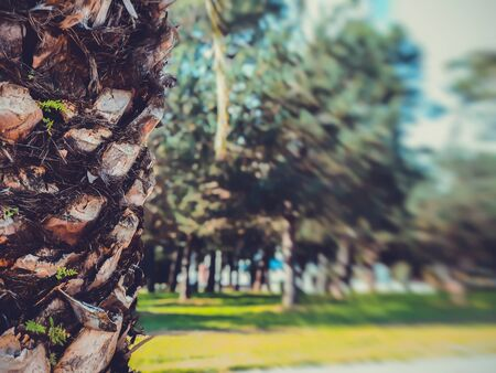 Beautiful landscape with trees in a city park, a warm autumn day in the city. Blur effect. 写真素材