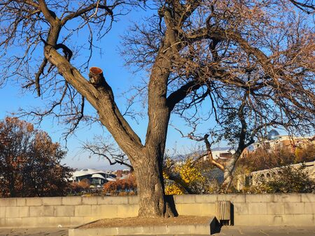 Beautiful landscape view of the old tree agains the sky. Old Tbilisi, winter in the city.