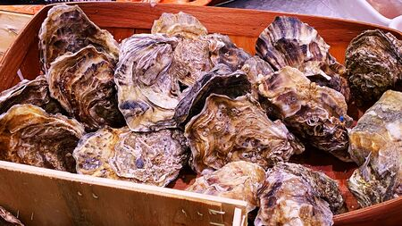 Many fresh oysters are relatively cool. Closeup of oysters in a store. Sea Health Food