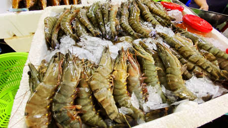 Fish market. Freshly caught shrimps in ice. Imagens