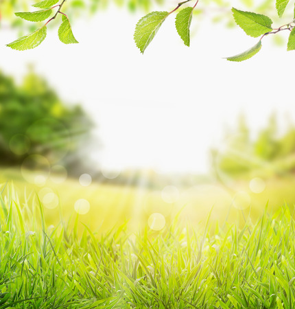 spring summer nature background with grass, trees branch with green leaves and  sun rays with bokeh