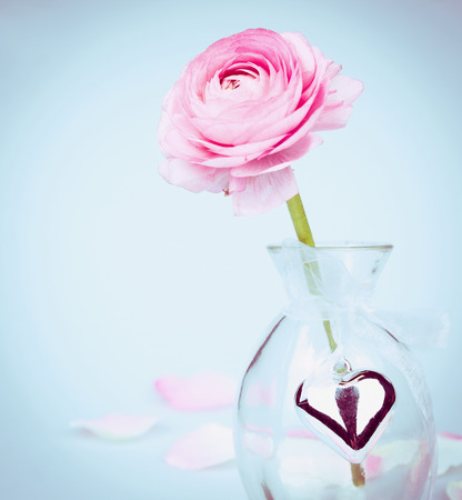 glas: Pink buttercup in glas vase with heart on blue background