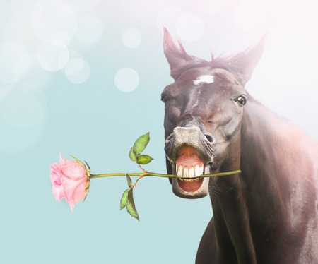 bay: Smile Horse with pink rose on blue bokeh background, holiday card