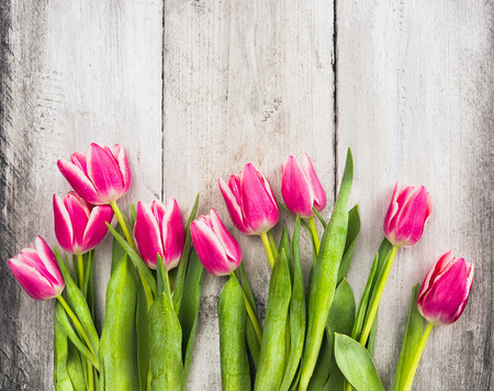 Pink fresh tulips flowers on gray wooden background Фото со стока