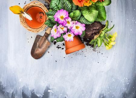 Frühlingsblumen Blumenerde mit Gartenwerkzeuge, Töpfe und Boden, auf grauem Holztisch, Ansicht von oben,
