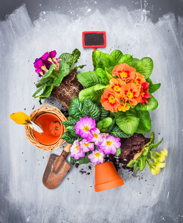 garden tool: Primula flowers potting set with pots,shovel and red sign, top view Stock Photo