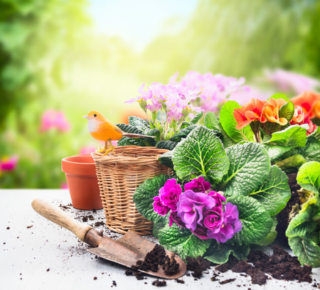 Gardening set on table with flowers, pots, potting soil and plants on sunny garden background