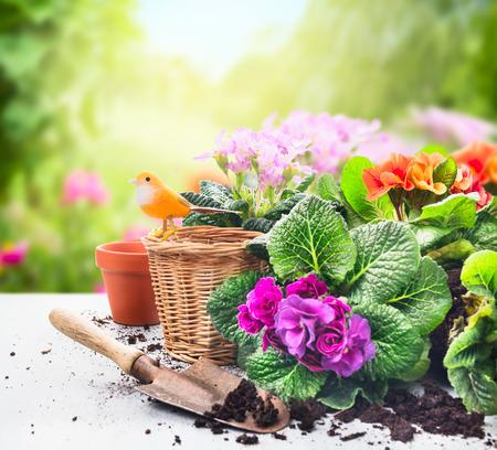 jardines con flores: Que cultiva un huerto establecido en la mesa con flores, macetas, tierra para macetas y plantas en el fondo del jard�n soleado