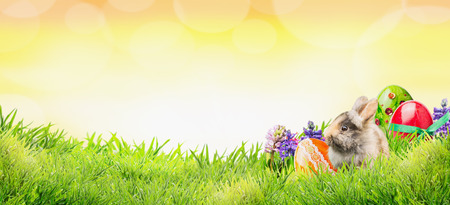 Easter background with bunny, eggs and flowers on grass and sunny sky with bokeh, banner for website 스톡 콘텐츠