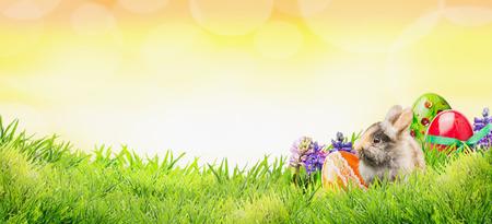Pasen achtergrond met bunny, eieren en bloemen op gras en zonnige hemel met bokeh, banner voor website