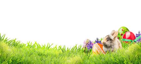 weinig paashaas met eieren en bloemen in de tuin gras op een witte achtergrond, banner voor website