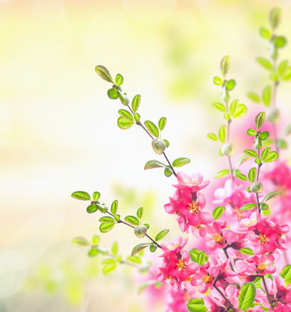hollidays: Spring summer nature background with Pink blooming bush, floral border