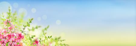 flores moradas: Rosa en flor Arbusto de membrillo japon�s en el fondo del paisaje soleado con el bokeh, bandera para el sitio web Foto de archivo