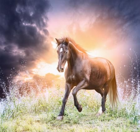 Paard loopt groene veld over dramatische hemel