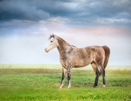 Horse standing on pasture over cloudy sky photo