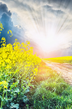 Rape on road to sunset in sun rays photo