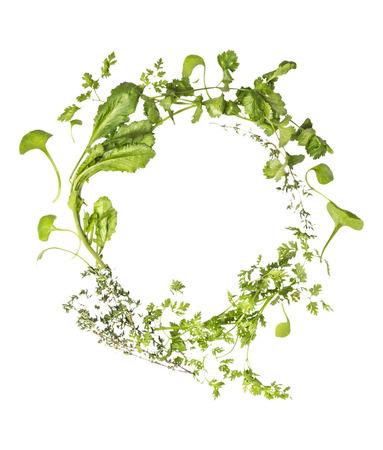 herbs wild: Hierbas silvestres guirnalda sobre fondo blanco