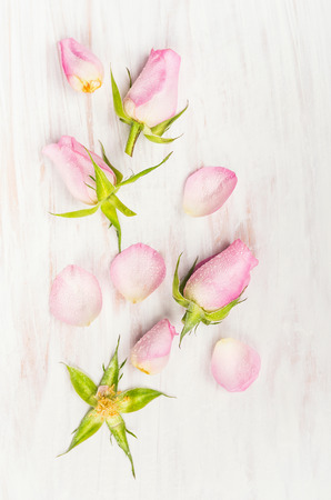 bourgeon: Rose buds and petals on white wooden background, top view