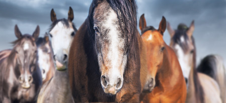 Herd of horses close up, banner Archivio Fotografico