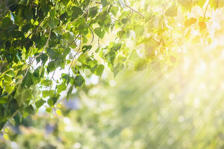 자연 봄 여름 녹색 잎 지점과 햇빛 배경 스톡 콘텐츠