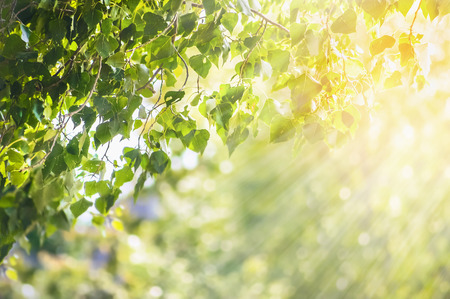Nature spring summer background with green leaves branch and sunlight