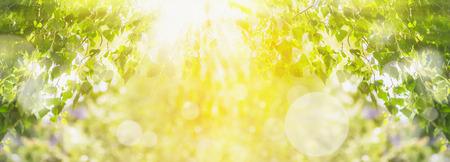 Lente zomer achtergrond met groene boom, zonlicht en zonnestralen, panorama