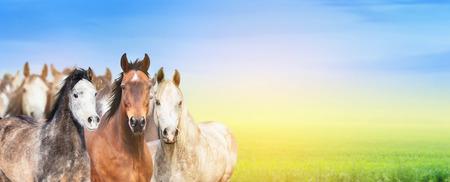 夏の牧草地、空と日光、ウェブサイトのバナーの背景に馬の群れ