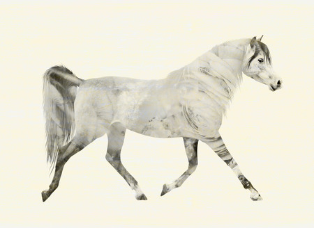 trot: Arabian horse in motion trot, gray double exposure