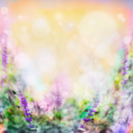 Colorful pink purple flowers blurred background with light and bokeh Stock Photo