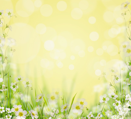 flowers field: Grass with white flowers blurred nature background, floral border Stock Photo