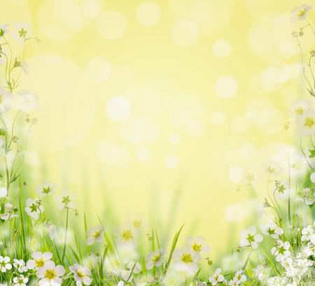 campo de flores: Hierba con el fondo de flores blancas naturaleza borrosa, frontera floral