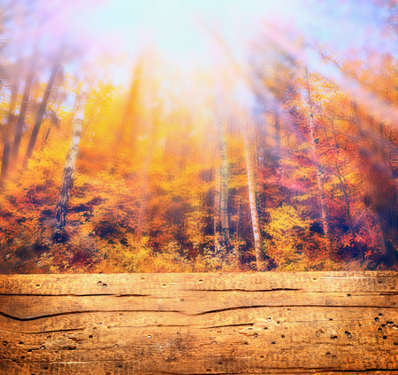 Autumn forest in sunlight and wooden table, nature background, toned photo