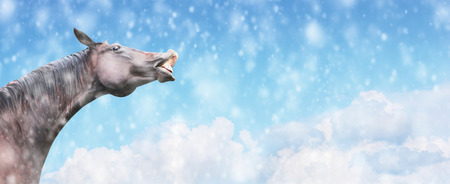 Black Horse smiles against background of falling snow and sky, winter banner for website photo