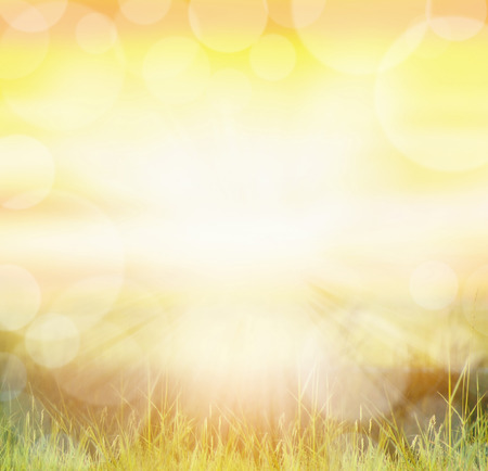 Sunny nature background with bokeh and sun rays on grass Stok Fotoğraf