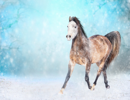 trot: Brown horse with white head runs trot in winter snowy field